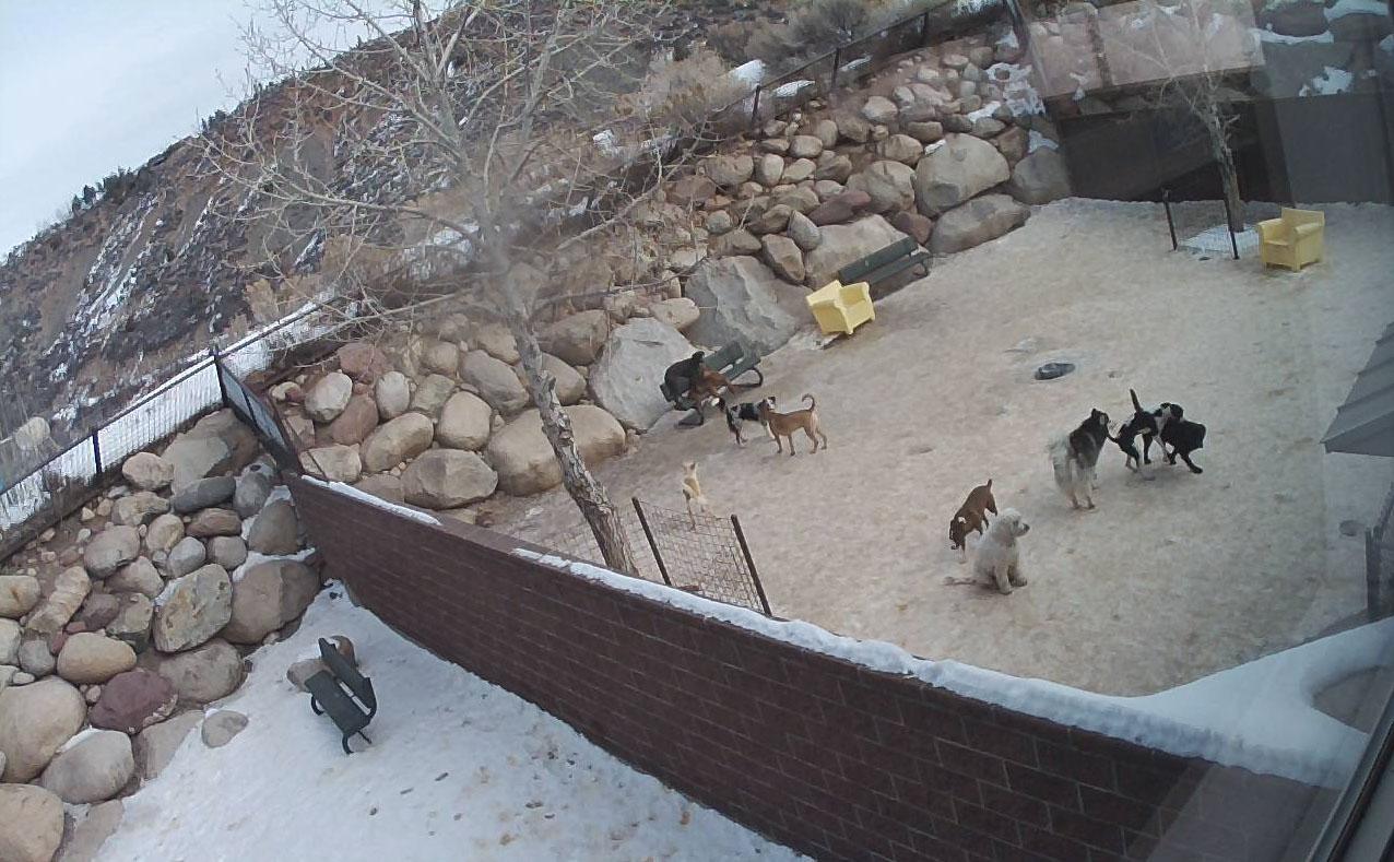 View of dog yard